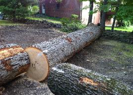 Large logs can be valuable, especially if sold the right way! Call AFC for high dollar log sales!