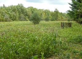 No longer bare dirt. This food plot really took off this summer and is now a desirable place for animals to feed.